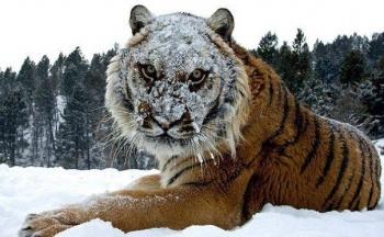 Пеликаны и тигры. Какие еще экзотические животные жили в оренбургской степи