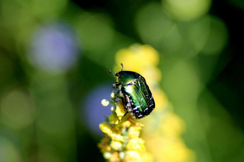 Макромир. Оренбургские насекомые в фотографиях Жанны Валиевой