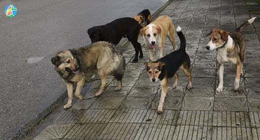 """Провал. Телеграм-канал """"Оренбургский городовой"""" о тендере на отлов бродячих собак в Оренбурге"""