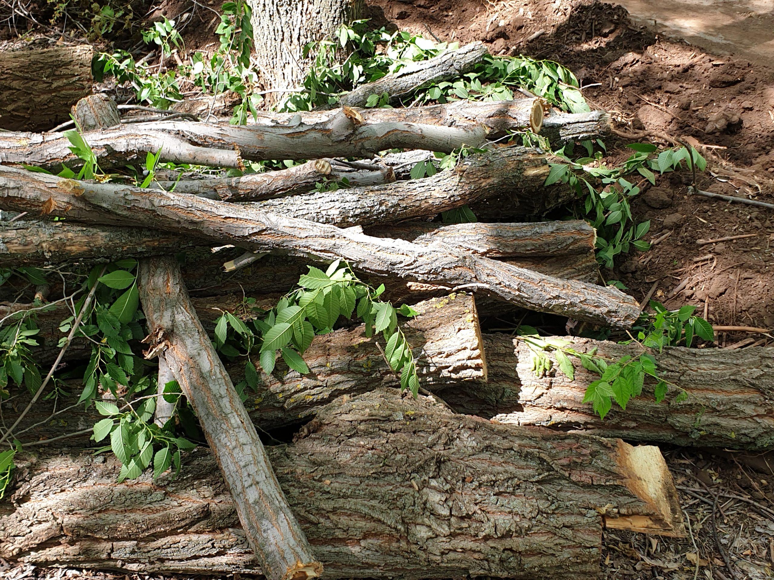 Комфортная среда – это когда вырубают лес. Согласны, губернатор Паслер?
