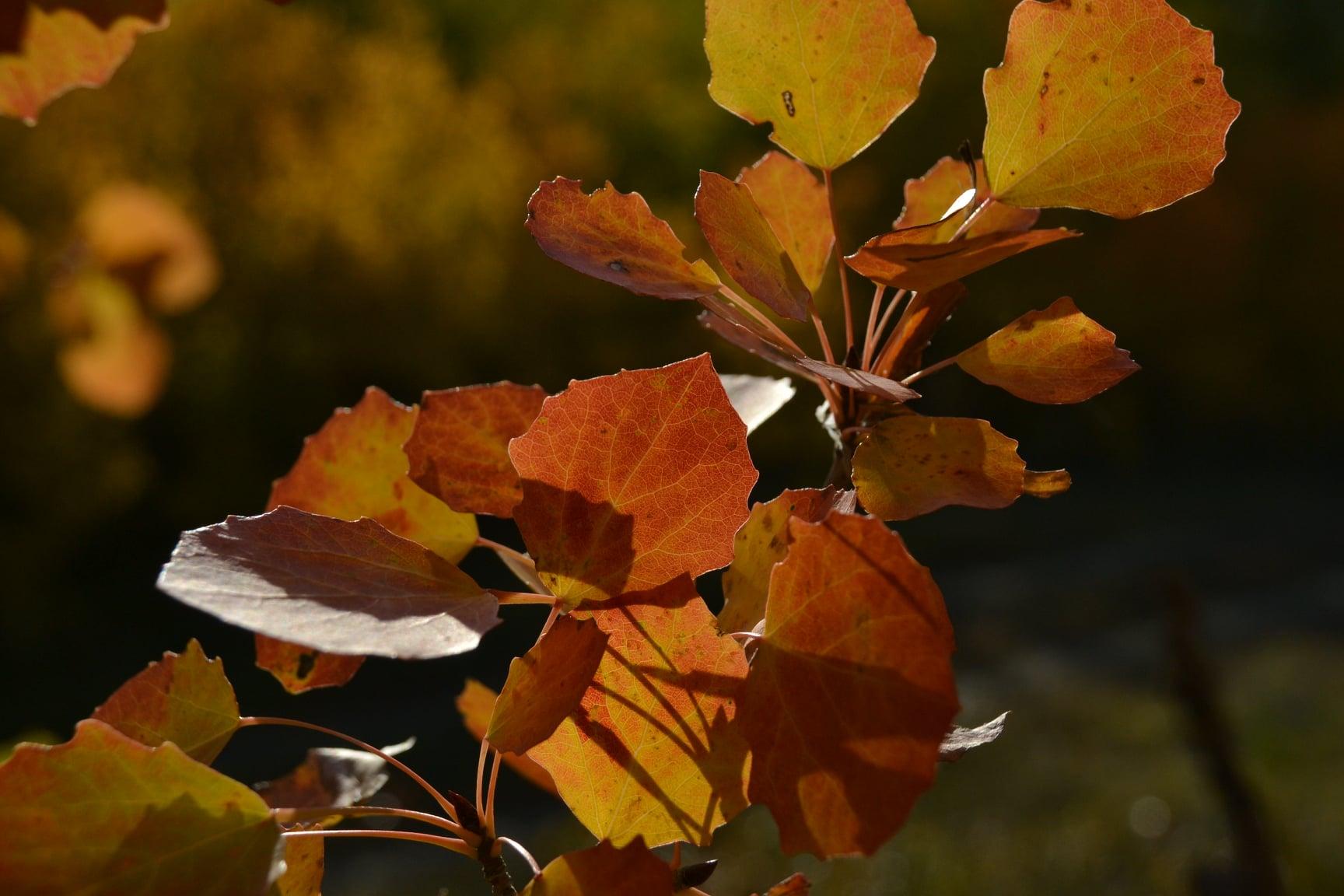 Заяц, выходи! Фотографии новотроицкого осеннего леса от Ольги Шейдт