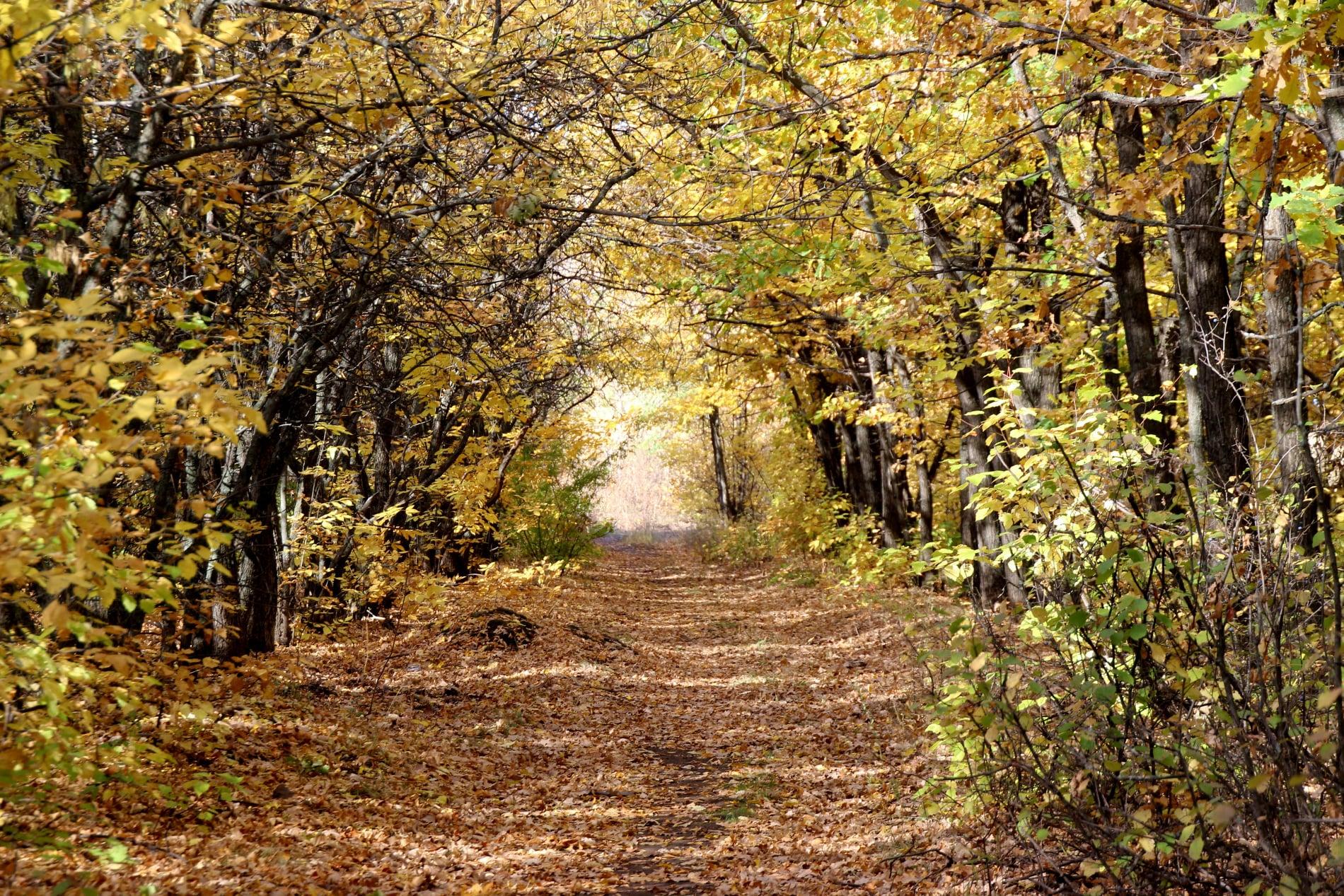Картина меняется. Фотографии оренбургского осеннего парка от Жанны Валиевой