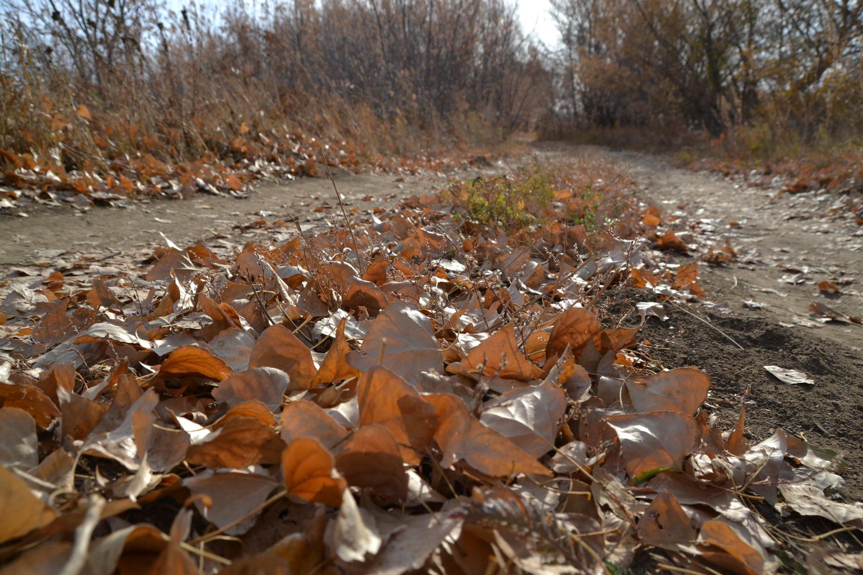 Дендропарк под листьями. Фотографии уральского берега от Ольги Шейдт