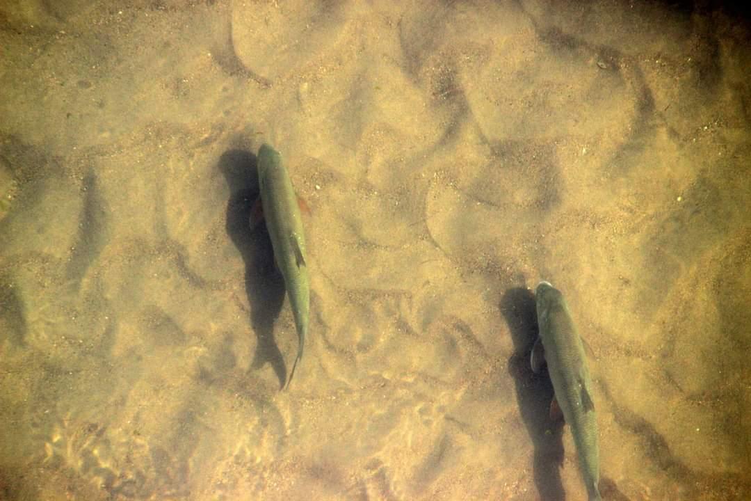 Обмельчал до неприличия. Подводный мир Урала в фотоподборке от Жанны Валиевой