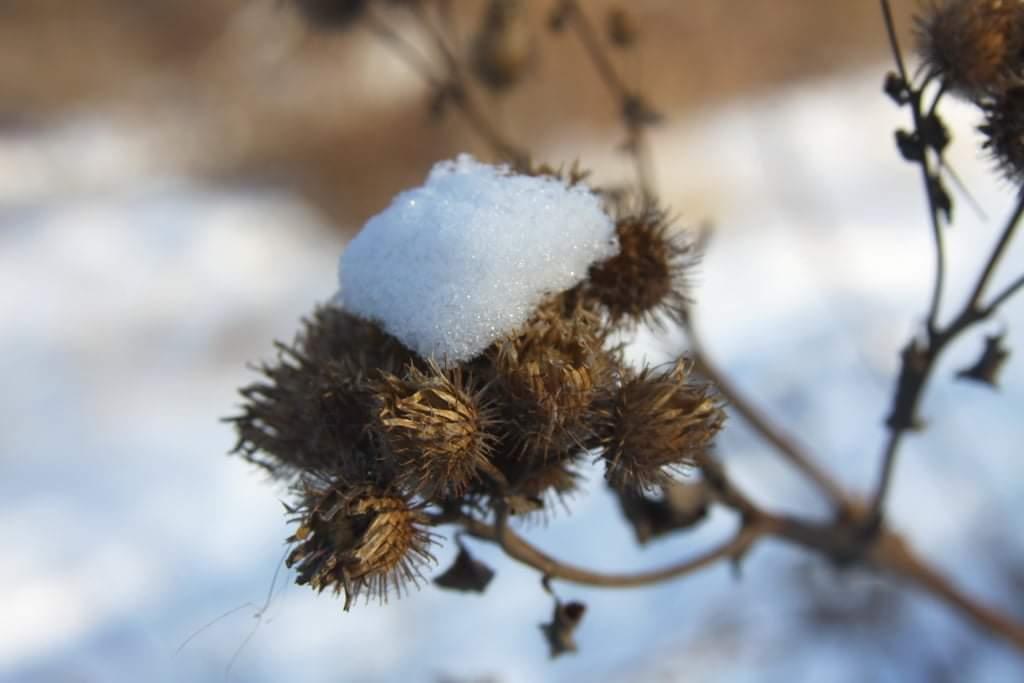 А за городом зима. Снежные фотографии Павла Лещенко
