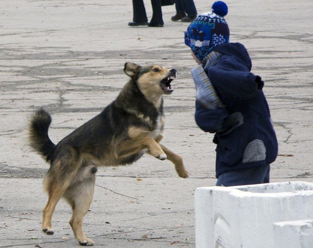 В Оренбурге вновь не нашли исполнителя на контракт по отлову собак